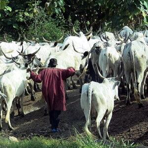 Yoruba Ko'Ya Foundation to Govt: Killings by criminals appearing as Fulani herdsmen must stop now